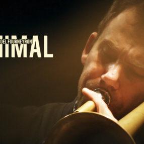 Animal en vidéo